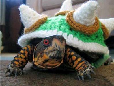 tortoise cover